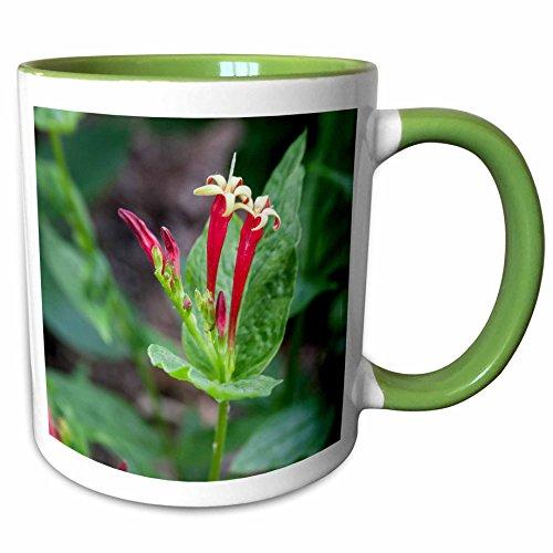 3dRose Danita Delimont - Brent Bergherm - Flowers - USA, North Carolina, Asheville. Indian Pink at the NC Arboretum. - 11oz Two-Tone Green Mug - Outlet Asheville Nc