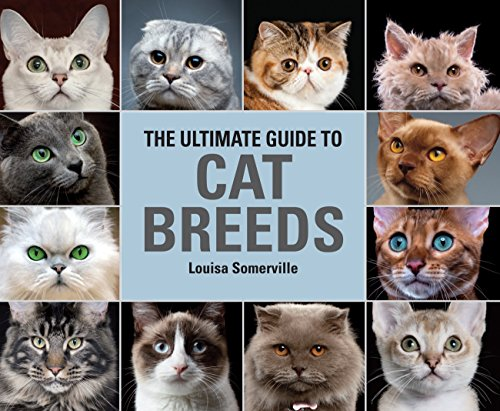 The Ultimate Guide To Cat Breeds: A useful means of identifying the cat breeds of the world and how to care for (Cat Breeds)