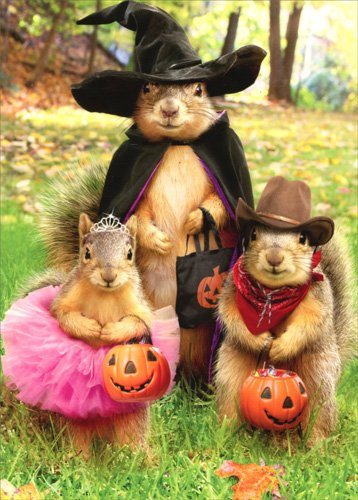 Squirrel Trick Or Treaters - Avanti Halloween Card -