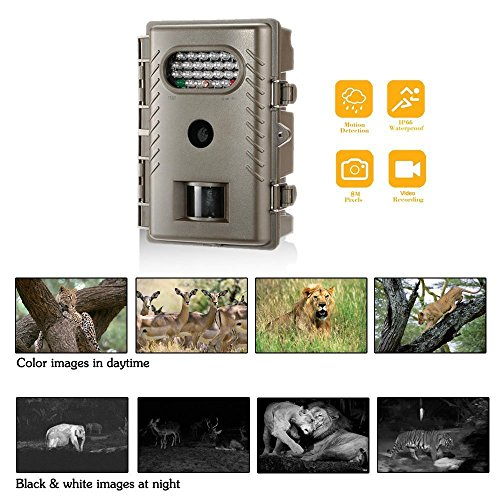 Cyberdax Trail Cam R20 8MP Digital Infrared Low Glow Night Vision Outdoor Waterproof Wildlife Scouting Hunting Camera by CYBERDAX (Image #8)