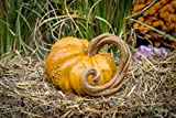 Autumn Halloween Stone Pumpkin & Cinderella Jacko'lantern Artificial Gourd Indoor and Outdoor Decor