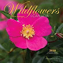 Wildflowers Of Canada 2018 Square Wall Calendar