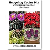 Hedgehog Cactus Mix (Echinocereus) 25+ Seeds