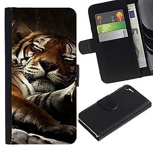 Planetar® Modelo colorido cuero carpeta tirón caso cubierta piel Holster Funda protección Para Apple iPhone 5 / iPhone 5S ( Tigre soñoliento del gato grande lindo Naturaleza Animal )