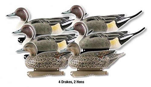 Avery Greenhead Gear Life-Size Duck Decoy,Pintails,1/2 Dozen