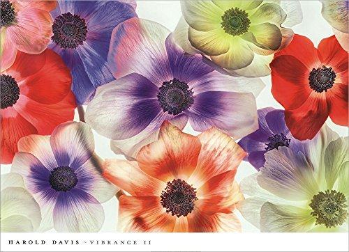 Vibrance II by Harold Davis Laminated Art Print, 36 x 26 inches