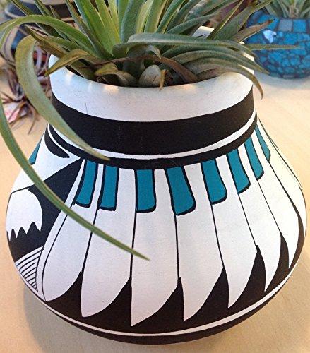 Tillandsia Air Plant in Mexican Pueblo Mata Ortiz Olla. Vintage pottery. Signed R. Galvan.