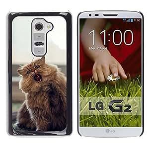 // PHONE CASE GIFT // Duro Estuche protector PC Cáscara Plástico Carcasa Funda Hard Protective Case for LG G2 / CUTE FURRY FLUFFY CAT /