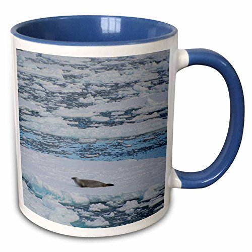 Crabeater Seal - 3dRose Danita Delimont - Seals - Antartica. The Gullet. Crabeater seal on an ice floe. - 15oz Two-Tone Blue Mug (mug_225259_11)