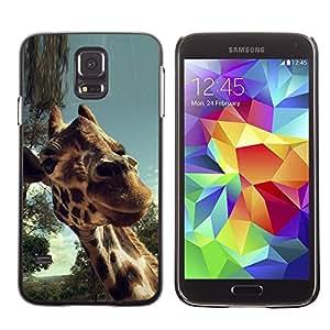 All Phone Most Case / Oferta Especial Duro Teléfono Inteligente PC Cáscara Funda Cubierta de proteccion Caso / Hard Case Samsung Galaxy S5 // Cute Girrafe Close Up