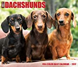 Just Dachshunds 2017 Box Calendar (Dog Breed Calendars)
