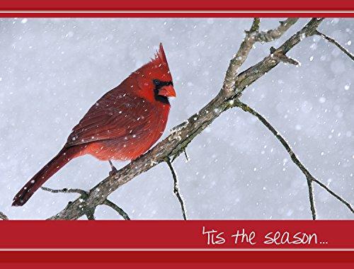 Cardinal Christmas Christmas Cards