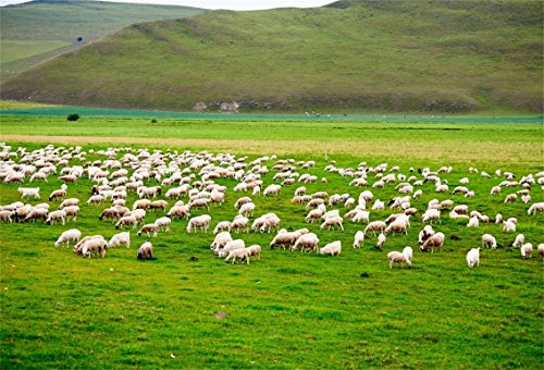 (CSFOTO 8x6ft Background for The Flock of Sheep on Summer Meadows Photography Backdrop Agriculture Green Farm Landscape Field Country Hill Mountain Greengrass Photo Studio Props Vinyl Wallpaper)