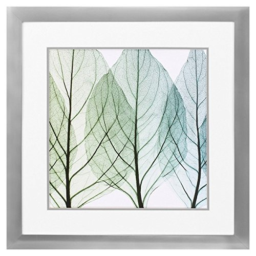 "Propac Images 4602 ""Celosias Leaves Ii"" Wall Decor"