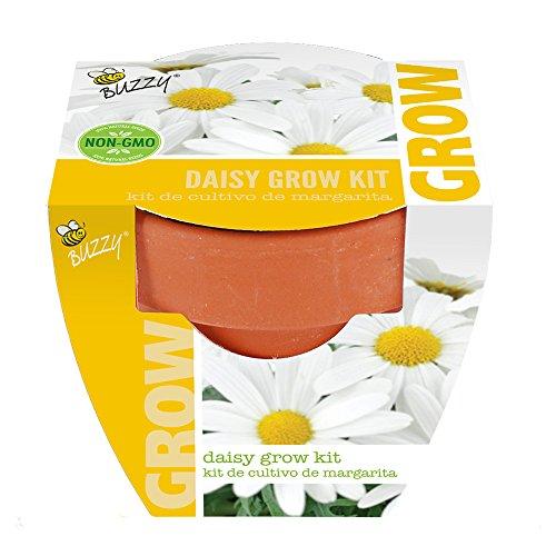 UPC 698942955207, Buzzy 95520 Daisy Mini Grow Pot