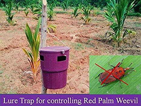 IAgriFarm Coconut Trap for Controlling Red Palm Weevil