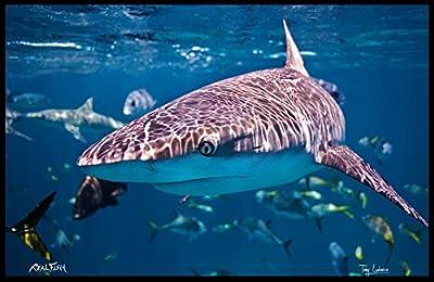 "Realfish Floor Mat, Fish Mat, Door Mat in Your face Shark 24"" x 36"" H20 Series"