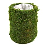 """Koyal Wholesale Cylinder Moss Vase (Pack of 6), 4 by 5"""", Green"""