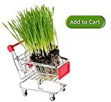 Premium Wheatgrass/ Cat Grass Seeds/ Hard Red Wheat. For Shots, Juicers, Trays, Kits and Planters. High Germination, Non-GMO, USDA Organic. Stay Fresh Re-sealable Packaging. Bonus How to Grow eBook.