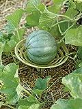Melon and Squash Cradles, Set of 6