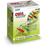 DNA Model Kit