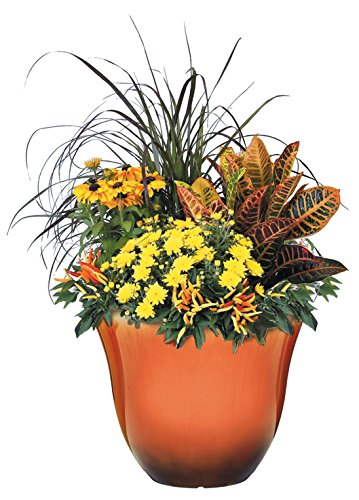 The 8 best succulent plants with orange flowers