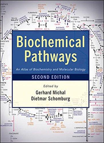 Biochemical Pathways  An Atlas Of Biochemistry And Molecular Biology
