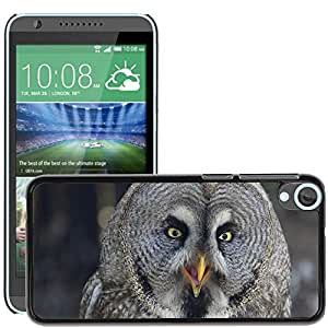 Hot Style Cell Phone PC Hard Case Cover // M00108376 Bird Of Prey Birds Nature Lapland Owl // HTC Desire 820