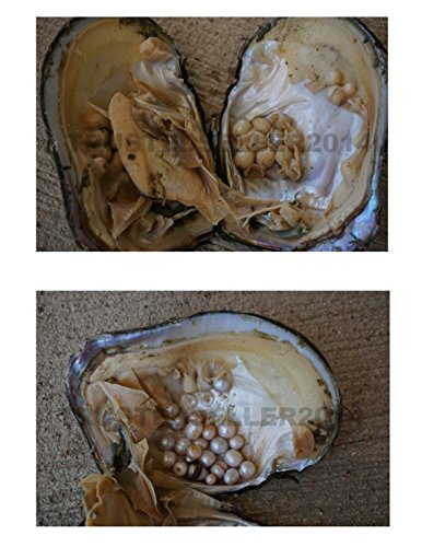 Real large big monster oyster with pearls pearl educational gift approx 12cm long educational (Large Oyster)
