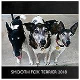 Smooth Fox Terrier 2018 Wall Calendar