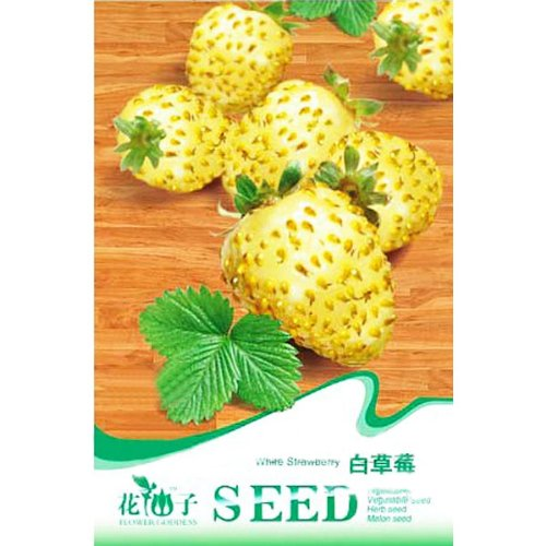20PCS White Strawberry Ornamental Plant Seeds
