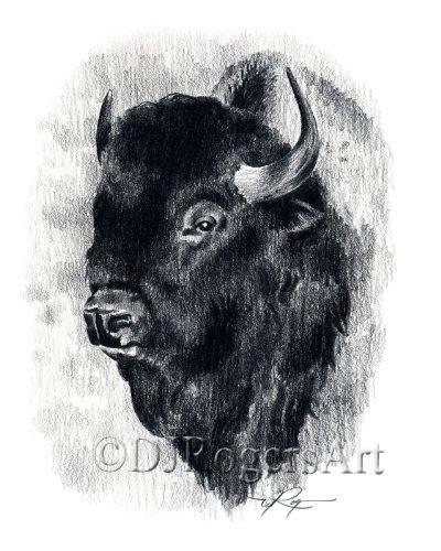 (Buffalo Pencil Drawing Bison Art Print by Artist DJ Rogers)