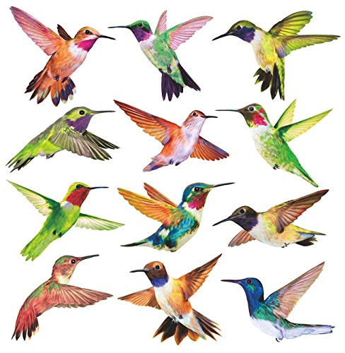 Bird Clings - 4
