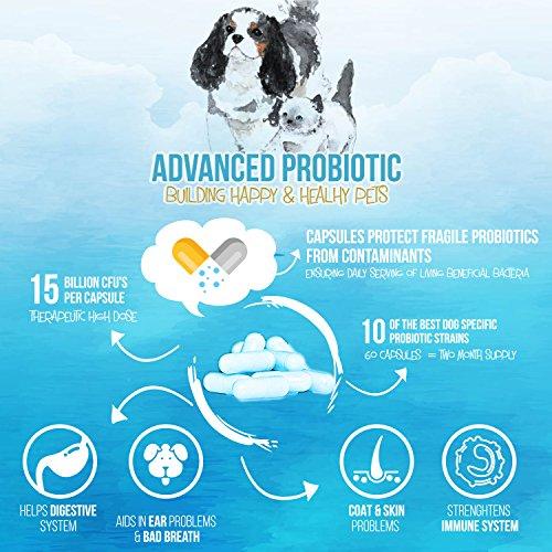 Agathas Apothecary sophisticated Probiotic Probiotics