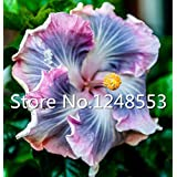 500 pcs / bag Special rare color hibiscus seeds flower seed Sementes De Flores Plants - Mix Rare Tropical Hibiscus Plant bonsai