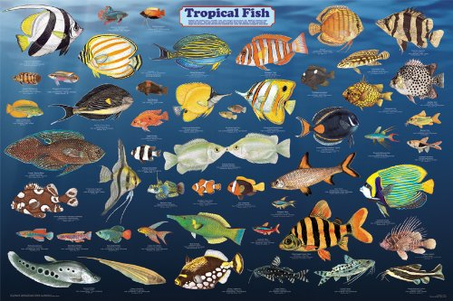 Laminated Tropical Fish Poster