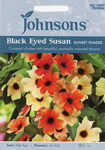 英国ミスターフォザーギルズシード&ジョンソンシードThunbergia (BLACK EYED SUSAN) arata Sunset Shades ツンベルギア・サンセット・シェイド