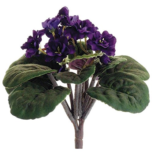 african-violet-bush-in-purple-105-tall