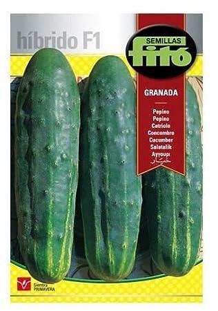 Semillas Fitó Híbridos 3622 - Pepino Granada