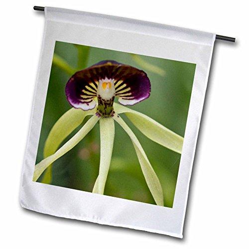 National Orchid Garden (3dRose fl_140876_1