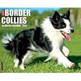 Border Collies 2015 Calendar