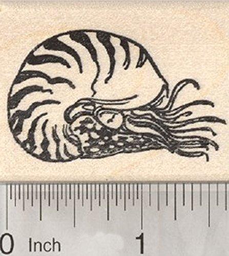 Nautilus Rubber Stamp, Mollusc Marine Wildlife