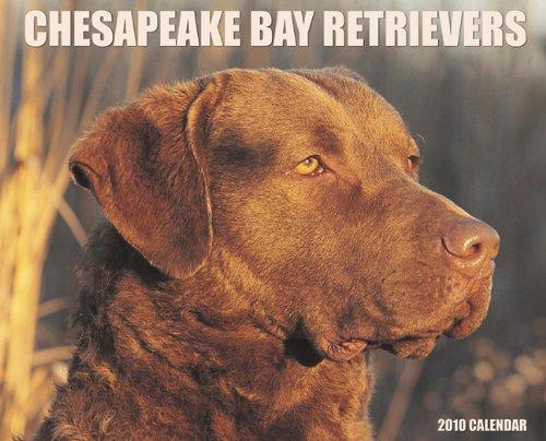 Retriever 2010 Calendar - Chesapeake Bay Retrievers 2010 Calendar