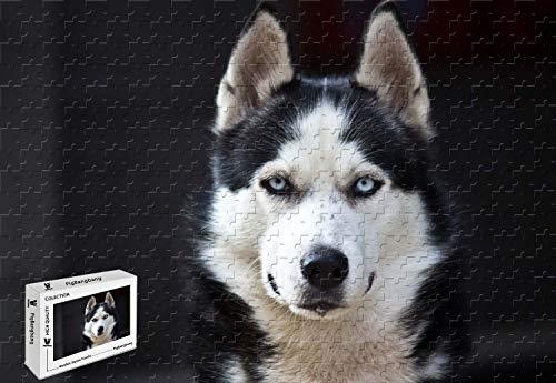 PigBangbang,20.6 X 15.1 Inch,Intellectiv Games Premium Basswood Jigsaw Glue - Husky Dog Blue Eyes White Black - 500 Piece Jigsaw Puzzle (White Husky With Blue Eyes For Sale)