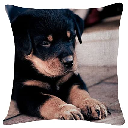 Amazoncom Cute Rottweiler Puppy Natural Animal Throw Pillow Case