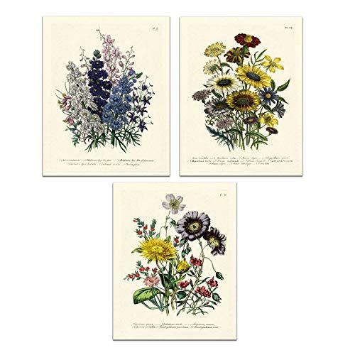 - Vintage Flower Bouquets - Larkspurs, Mums and Herbs - Botanical Wall Decor Art Print 8 x 10 Unframed (Set of 3)