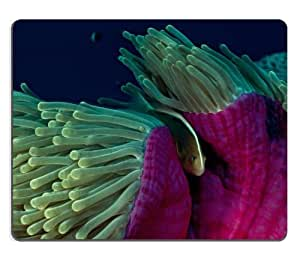 Animal Fish Anemone Ocean Wildlife Sea Coral Reef Night Mouse Pads Customized Made to Order Support Ready 9 7/8 Inch (250mm) X 7 7/8 Inch (200mm) X 1/16 Inch (2mm) High Quality Eco Friendly Cloth with Neoprene Rubber Luxlady Mouse Pad Desktop Mousepad Laptop Mousepads Comfortable Computer Mouse Mat Cute Gaming Mouse pad