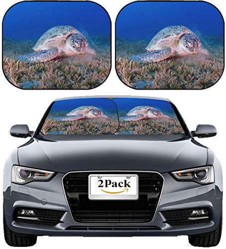 MSD Car Sun Shade Windshield Sunshade Universal Fit 2 Pack, Block Sun Glare, UV and Heat, Protect Car Interior, Image ID: 34267839 A Green Chelonia mydas Feeds on sea Grass in The Red Sea