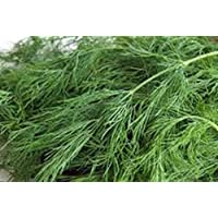 Dill Seed, Bouquet, Heirloom, Organic, Non Gmo, 25+ Seeds, Herb Fresh or Dried