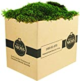 Preserved Sheet Moss 1 cu' Box